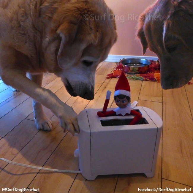 20 Clever Elf On The Shelf Ideas Starring Family Dog